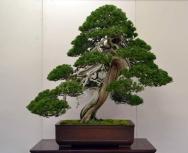 OR Kokufu 2012 (11)