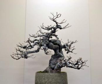 OR Kokufu 2012 (12)