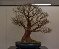 OR Kokufu 2012 (20)