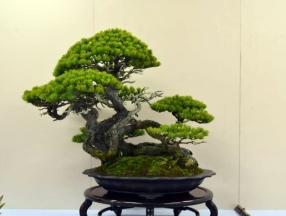 OR Kokufu 2012 (23)