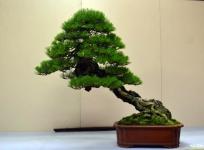 OR Kokufu 2012 (5)