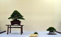 OR Kokufu 2012 (7)