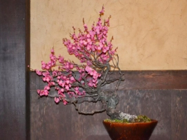 OR Ume Dining (12)