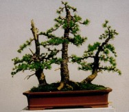 larch group 1997