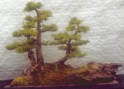 Larch group 2000