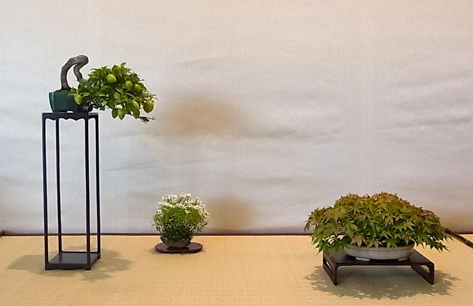 Shohin Displays - Japan Img_428882_13441365_0