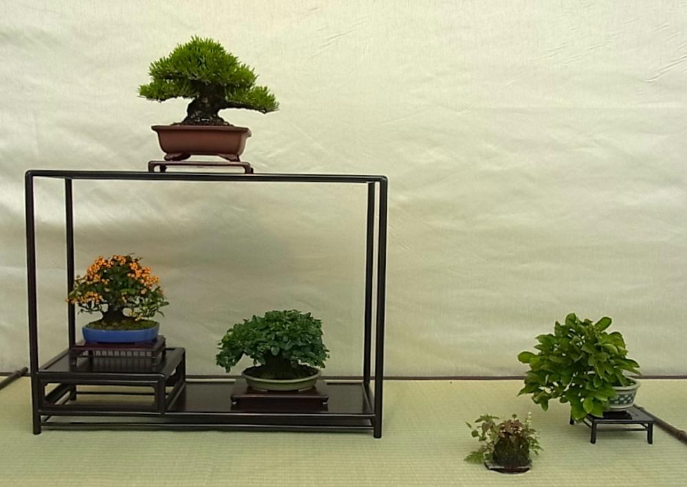Shohin Displays - Japan Img_428882_13441375_0