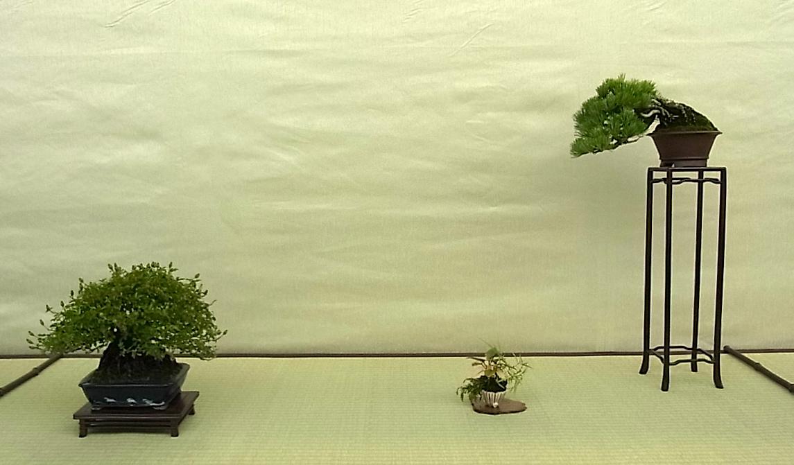 Shohin Displays - Japan Img_428882_13441375_1