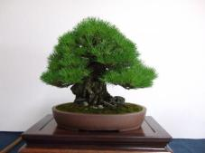 Kubote Engei (1)