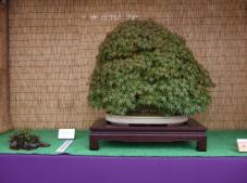 Kubote Engei (11)