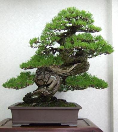 Kubote Engei (14)