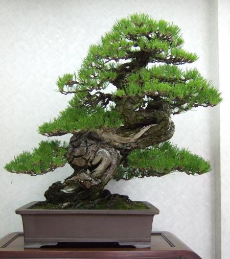 Kobote Engei Exhibition Photos Kubote-engei-14