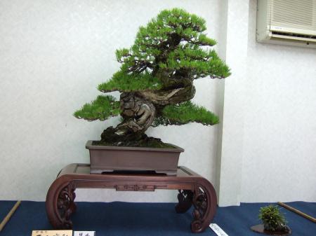 Kobote Engei Exhibition Photos Kubote-engei-15