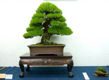 Kubote Engei (27)