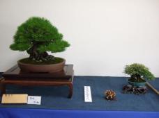 Kubote Engei (3)