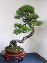 Kubote Engei (33)