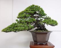 Kubote Engei (6)