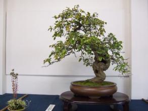 Kubote Engei (8)