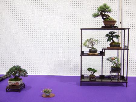 Shohin Displays - Japan Kyusyu-exhibition-16