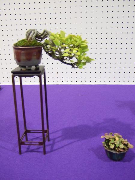 Shohin Displays - Japan Kyusyu-exhibition-7