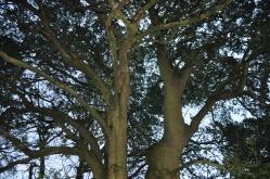 oak still in leaf!!