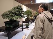 Kokufu Ten 2013 JS (20)