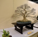 Kokufu Ten 2013 JS (34)