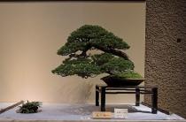 Kokufu Ten 2013 JS (45)
