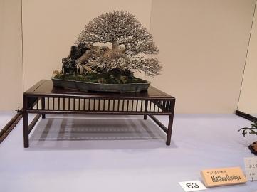 Kokufu Ten 2013 JS (46)