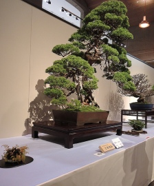 Kokufu Ten 2013 JS (47)