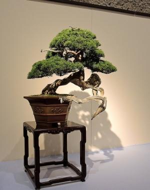 Kokufu Ten 2013 JS (55)