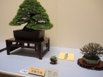 Kokufu Ten 2013 JS (57)