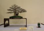 Kokufu Ten 2013 JS (63)