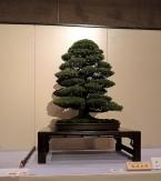 Kokufu Ten 2013 JS (70)