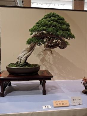 Kokufu Ten 2013 JS (72)