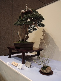 Kokufu Ten 2013 JS (77)