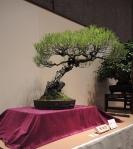 Kokufu Ten 2013 JS (84)