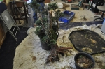 Smaller Spruce for potting