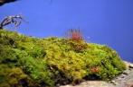 moss seed heads