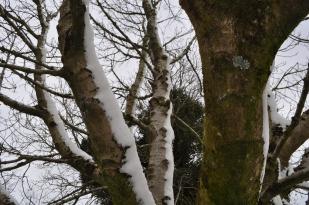 Snow blasted
