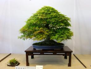 Nishinihon meihin-ten (10)