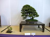 Nishinihon meihin-ten (16)