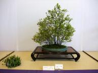 Nishinihon meihin-ten (17)