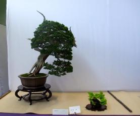 Nishinihon meihin-ten (26)