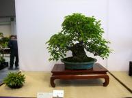 Nishinihon meihin-ten (6)