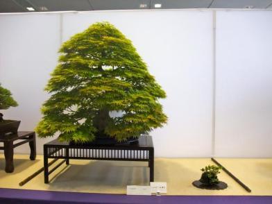 Nishinihon meihin-ten (9)