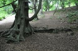 Frodos hiding spot!