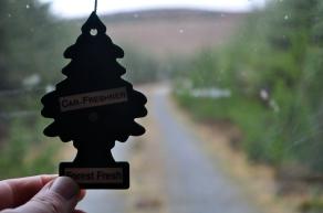 My tree :-)