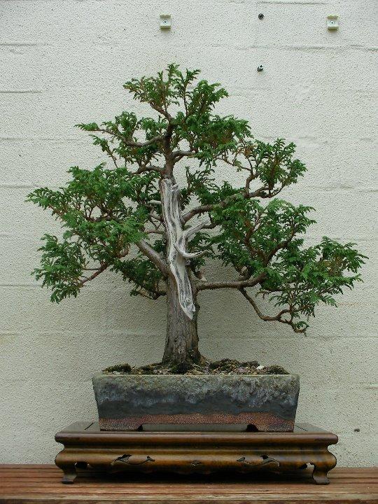 Stolentree