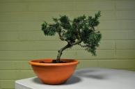 demo tree
